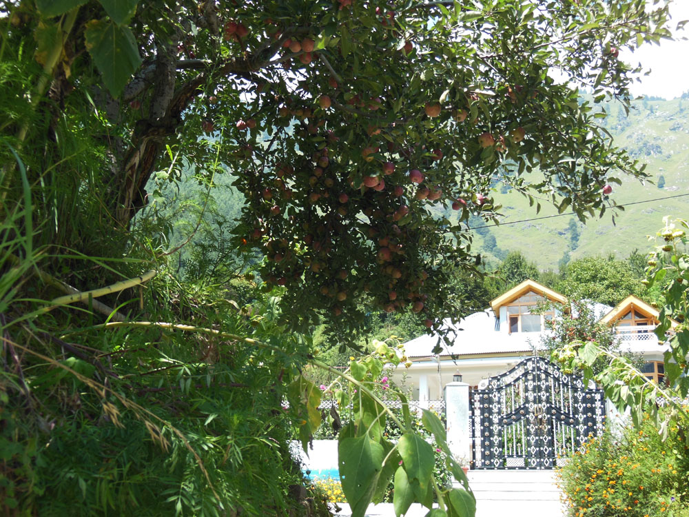 Apple Tree Premier Cottage No.4 - River View Cottage in Manali