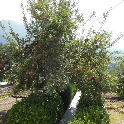 Apple Tree Premier Cottage No.4 - River View Cottage in Manali near Mall Road