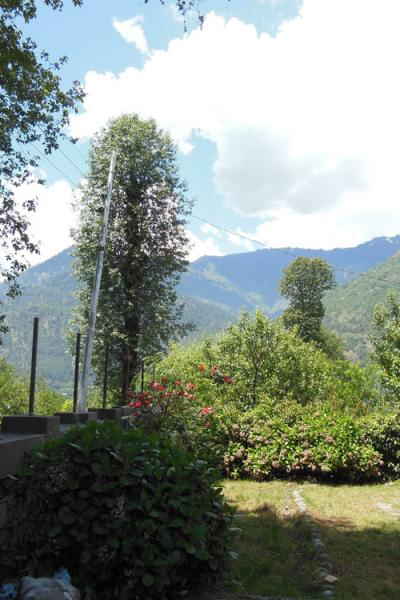 Luxury Cottage No.2 - Four Bedroom Cottage in Manali